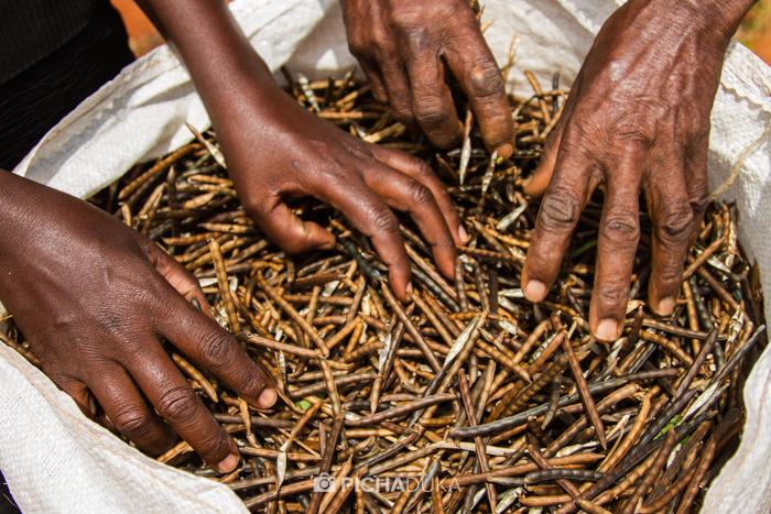 Farm_Africa_Kitui_by_Mwangi_Kirubi-20