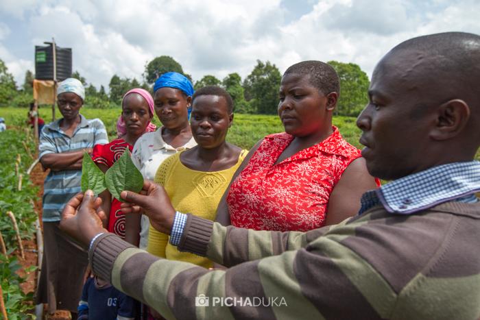Farm_Africa_Western_Kenya_by_Mwangi_Kirubi-11