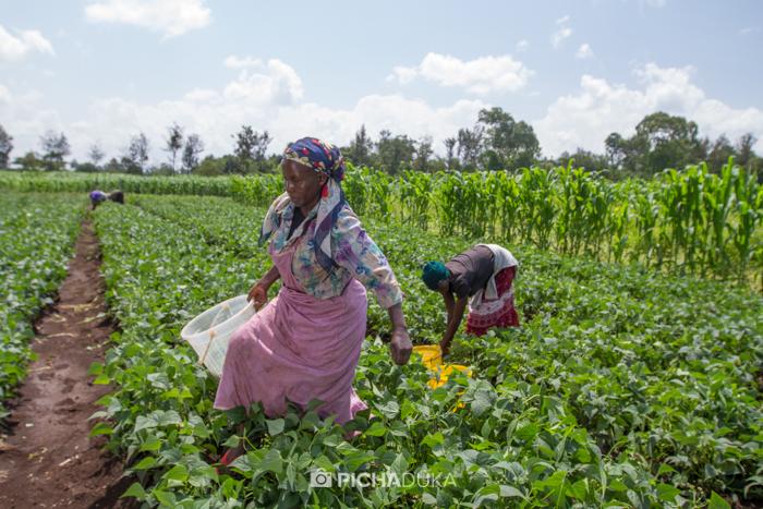 Farm_Africa_Western_Kenya_by_Mwangi_Kirubi-17