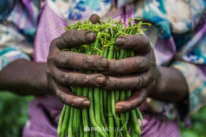 Farm_Africa_Western_Kenya_by_Mwangi_Kirubi-18