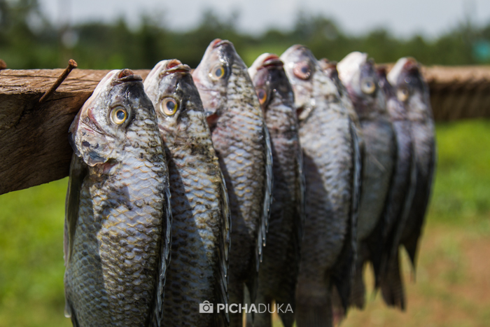 Farm_Africa_Western_Kenya_by_Mwangi_Kirubi-24