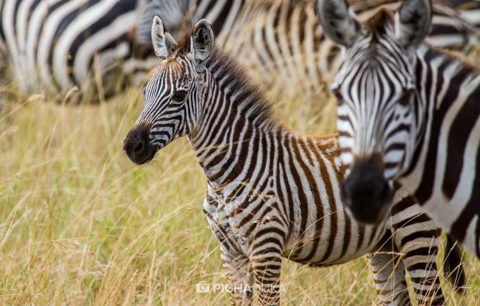 Masai_Mara-by-Mwangi_Kirubi-13