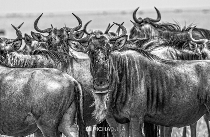 Masai_Mara-by-Mwangi_Kirubi-14