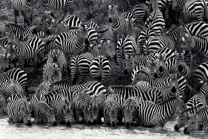 Masai_Mara-by-Mwangi_Kirubi-20