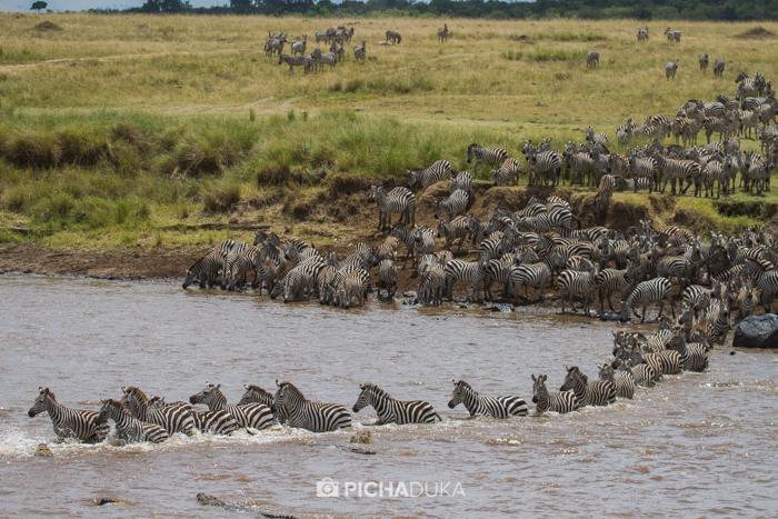 Masai_Mara-by-Mwangi_Kirubi-22