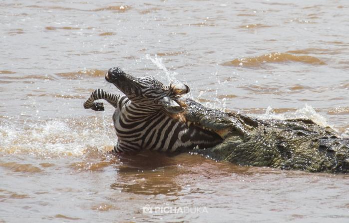 Masai_Mara-by-Mwangi_Kirubi-25