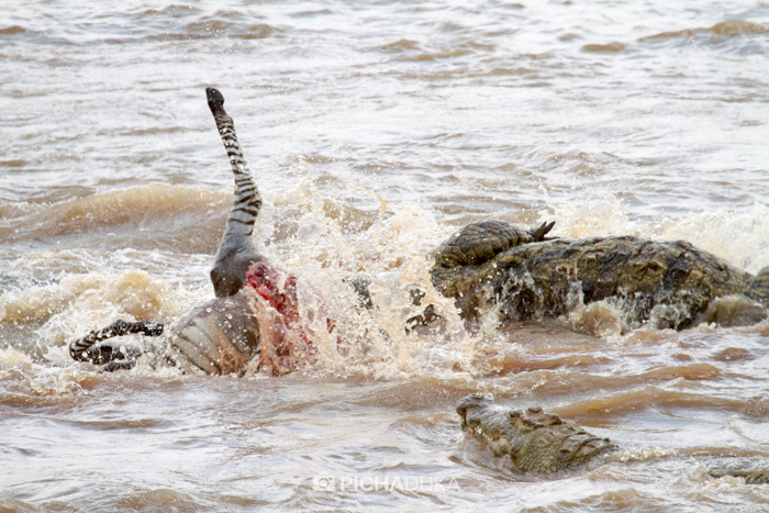 Masai_Mara-by-Mwangi_Kirubi-27