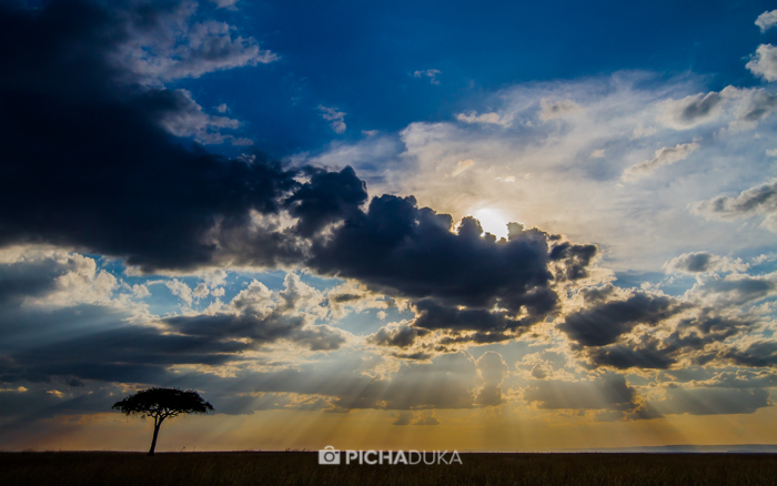 Masai_Mara-by-Mwangi_Kirubi-40