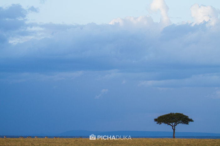 Masai_Mara-by-Mwangi_Kirubi-41