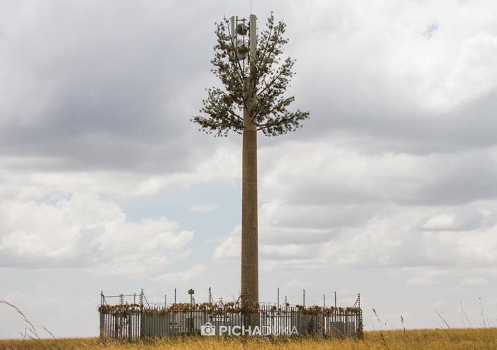 Masai_Mara-by-Mwangi_Kirubi-5