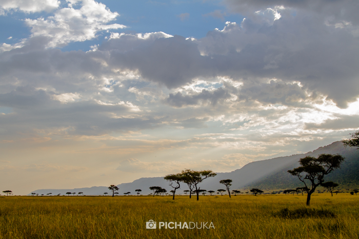 Masai_Mara-by-Mwangi_Kirubi-8