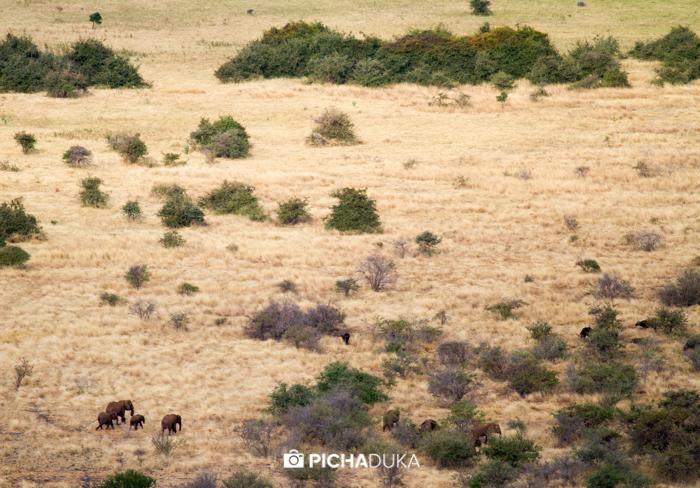 Meru-National-Park-Mwangi-Kirubi-41