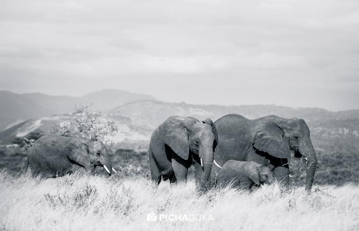 The Wilderness of Meru