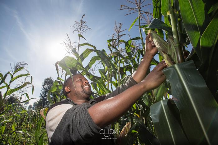 SoilCares-Meru-Mwangi-Kirubi-6