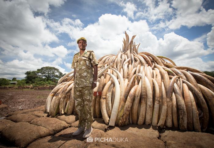 Ivory-Burn-Kenya-10
