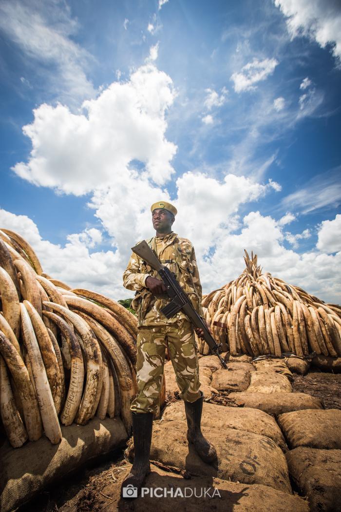 Ivory-Burn-Kenya-15