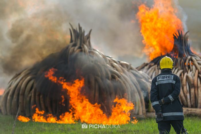Kenya-Ivory-Burning-33