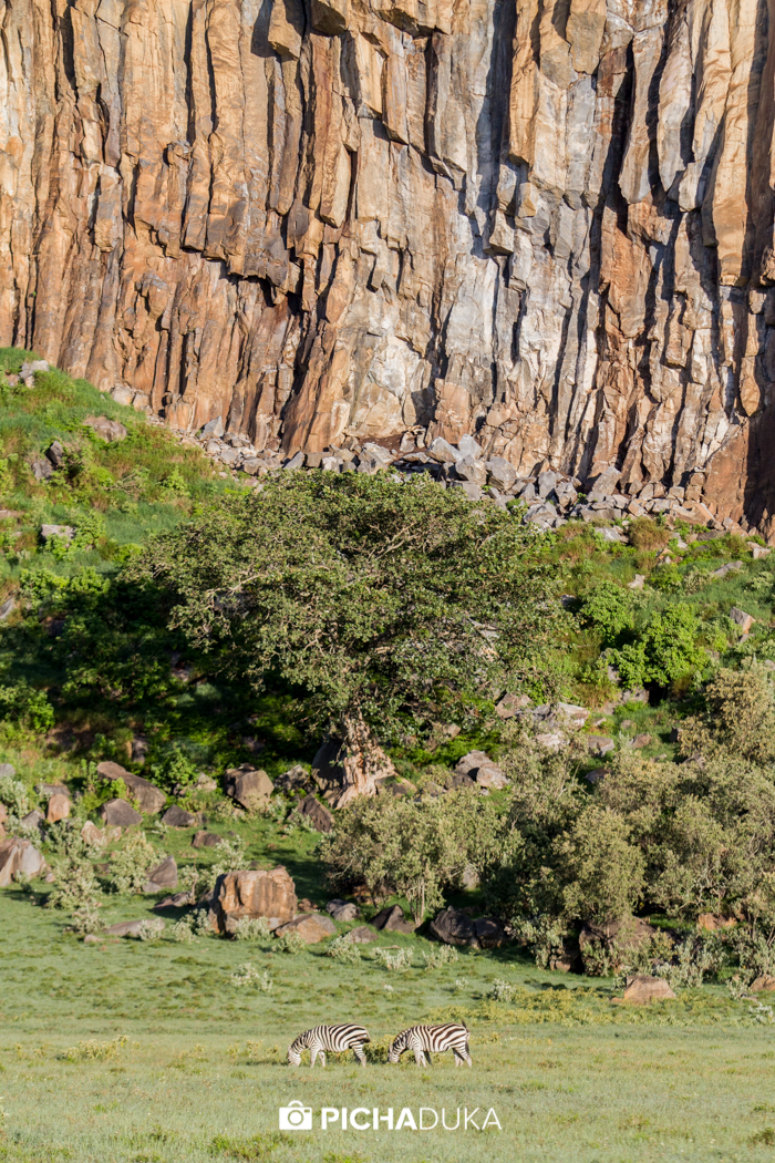 Zebras graze by an escarpment wall in Hell's Gate National Park on 9th May 2016.