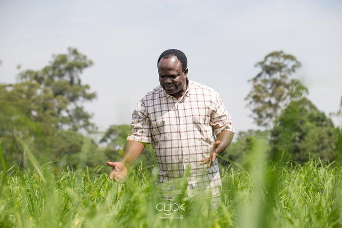 Dr Chrispus Oduori in the Kenya Agricultural and Livestock Research Organisation finger millet farm in Kakamega, Kenya, on 22nd July 2016. Agra funded Dr Oduori's PhD training at University of Natal and later gave him a grant to advance his PhD products to the point of release to farmers. One of these products is 'maridadi' finger millet which in comparison to traditional varieties has higher yield, early maturity, adaptable to the environment, resistant to biotic stresses and drought. Farmers planting 'maridadi' finger millet have recorded up to 500% increases in yield in comparison to traditional varieties.