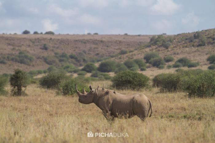 NairobiNationalPark-MwangiKirubi-13