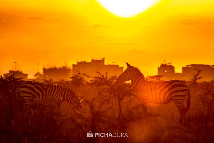 NairobiNationalPark-MwangiKirubi-19