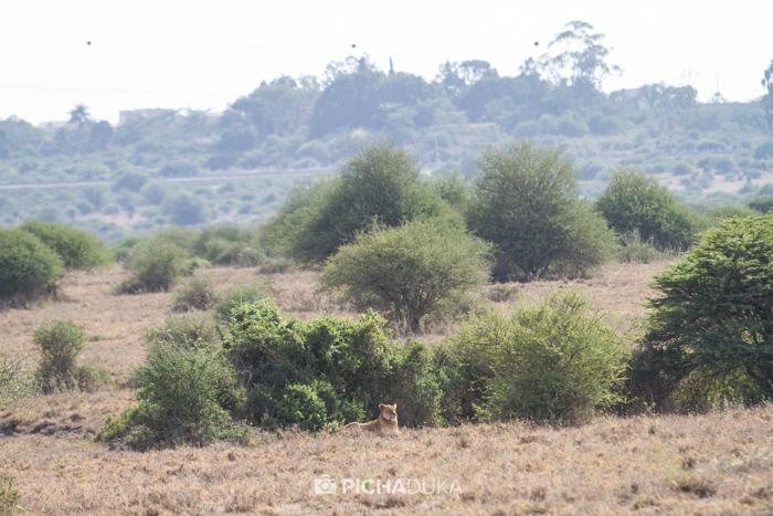 NairobiNationalPark-MwangiKirubi-9