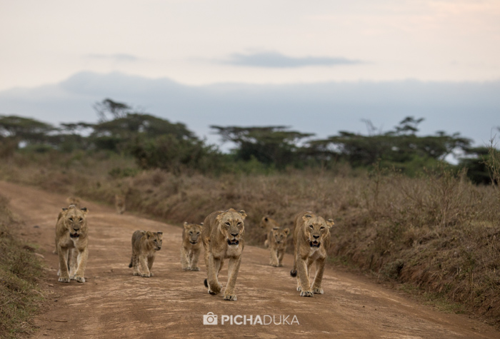 Nairobi-National-Park_Mwangi-Kirubi-4