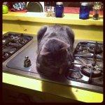 Roast beast (Taken with instagram)