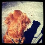 A handsome dog and his shadow. (Taken with instagram)