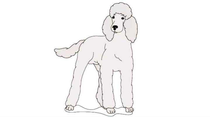 how-to-draw-a-poodle_09