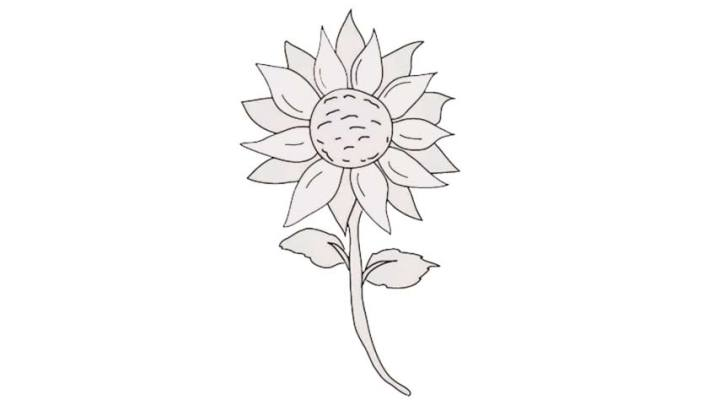 how-to-draw-a-sunflower_12