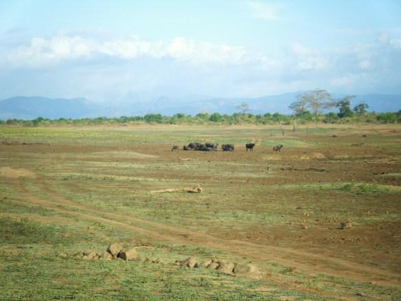 DSCF3117 1024x768 Safari au parc dUda Walawe