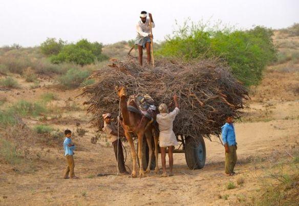 P4040468 Méharée dans le désert du Thar