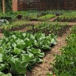 125 Garden featured