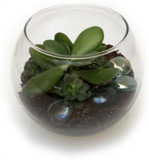 PHOTO: A tiny terrarium.