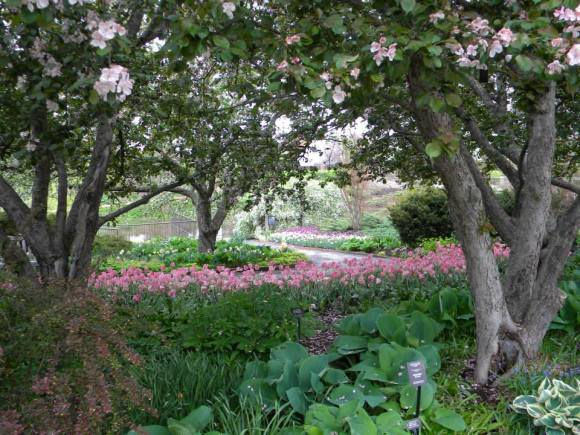 PHOTO: Sweeps of tulips line the winding paths of the bulb garden.