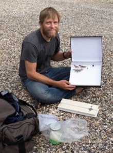 PHOTO: Dr. Rick Overson with hawkmoth specimens.