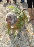 Best Horticultural Interpretation