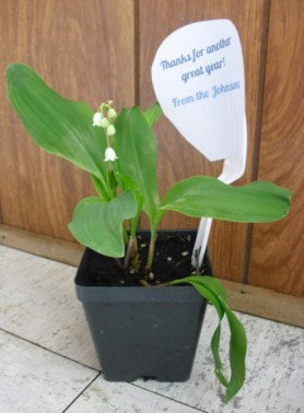 PHOTO: Lily of the valley plant, with thank you not held in the pot through the tines of a fork.