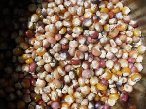 PHOTO: a bowl full of colored corn seeds, or kernels.