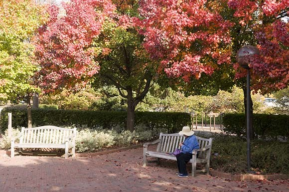 Callery pear and euonymous plantings at the Visitor Center entrance in autumn of 2010.