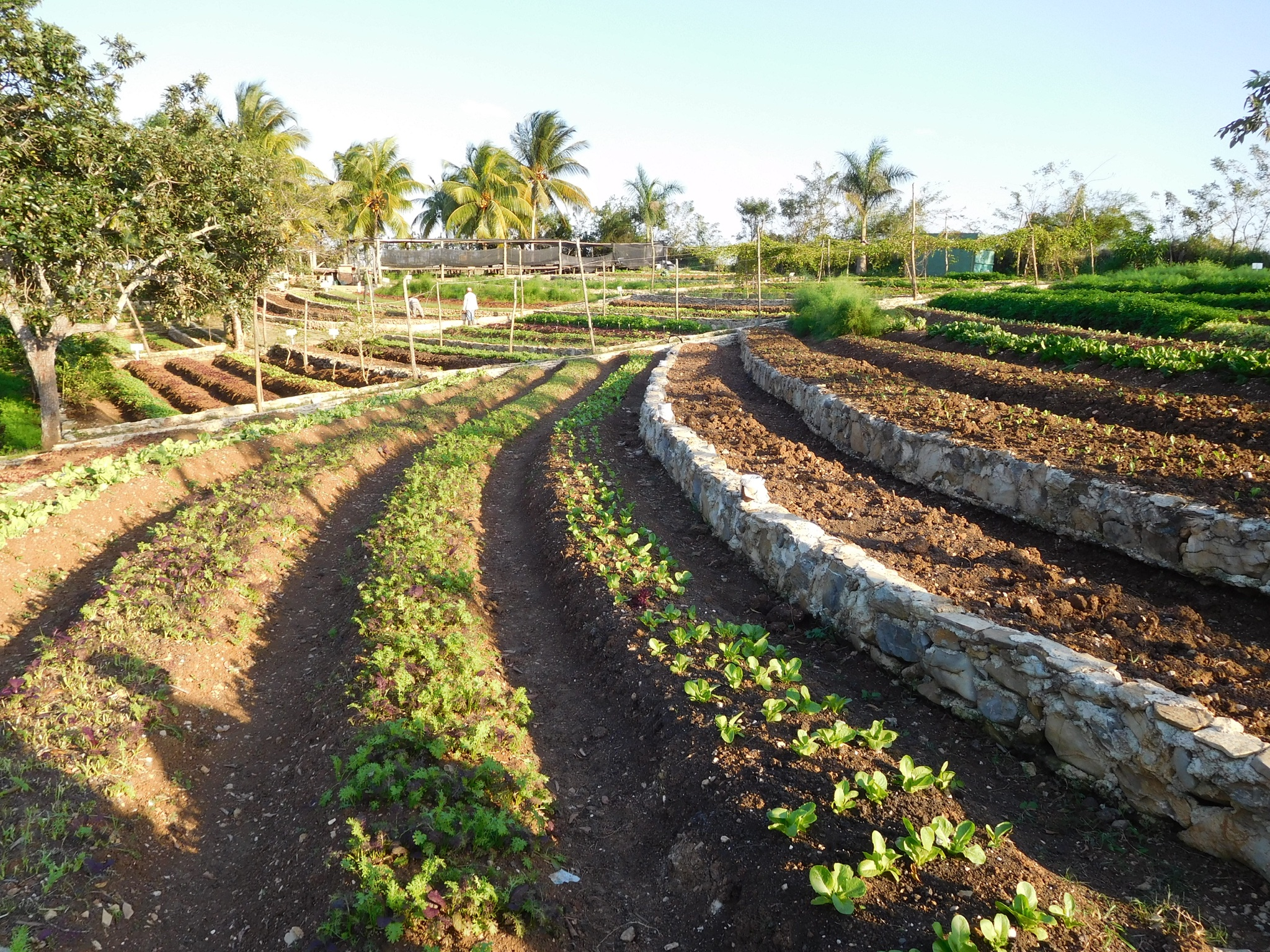 Cultivating nostalgia my chicago botanic garden for Terrace farming meaning