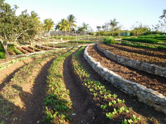 PHOTO: Finca Marta, Fernando Funes' farm outside of Havana, Cuba, in the province Artemisa.