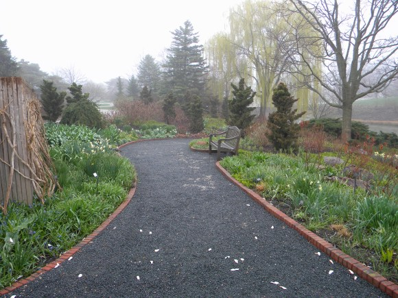 PHOTO: A view of the south path, now filled with narcissus.