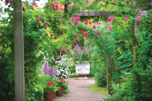 PHOTO: A view through the English Walled Garden, with roses draping over a myriad of flowers in bloom.