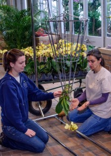 PHOTO: Two staffers gently weave orchids and roots into a metal cone framework.