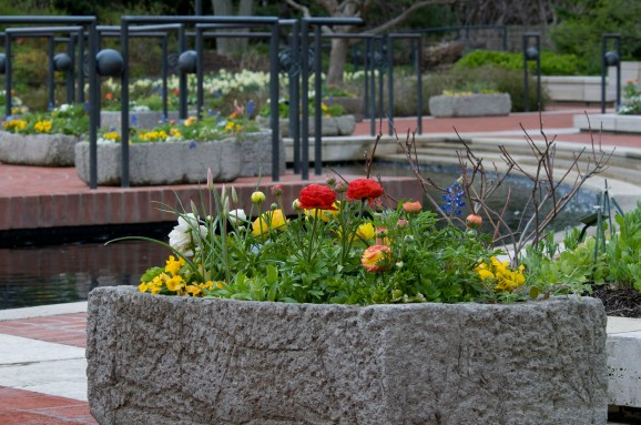 PHOTO: Heritage Garden troughs from May 2009 display.