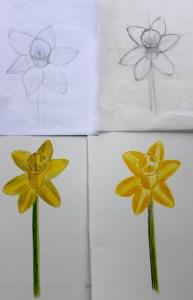 ILLUSTRATION: Narcissus sketches by Sophia Siskel