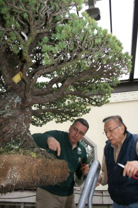 PHOTO: Jack Sustic (left), curator, National Bonsai & Penjing Museum (at the United States National Arboretum), with a volunteer, World Bonsai Day 2014