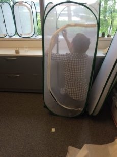 PHOTO: Krissa Skogen moves a moth to its new enclosure in her office.